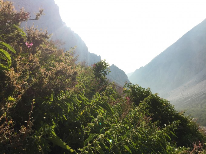 Fireweed and Nettles on Taboose Pass