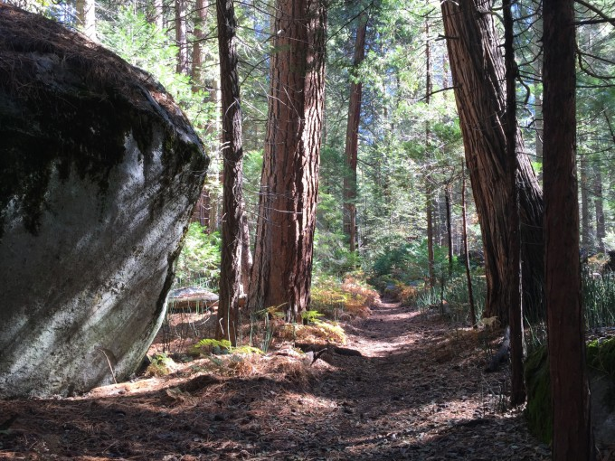 Old growth near Roads End. Let's put this into scale: those redwoods would take a few people holding hands to reach around. That erratic is simply enormous. There might be dinosaurs somewhere... or big bears.
